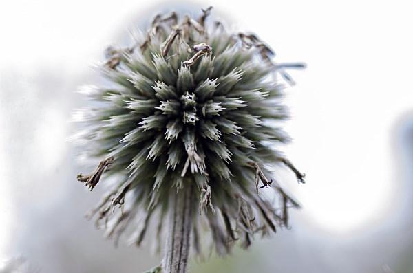 Kwiaty i rośliny w moim obiektywie.                             Nie tylko Makro.